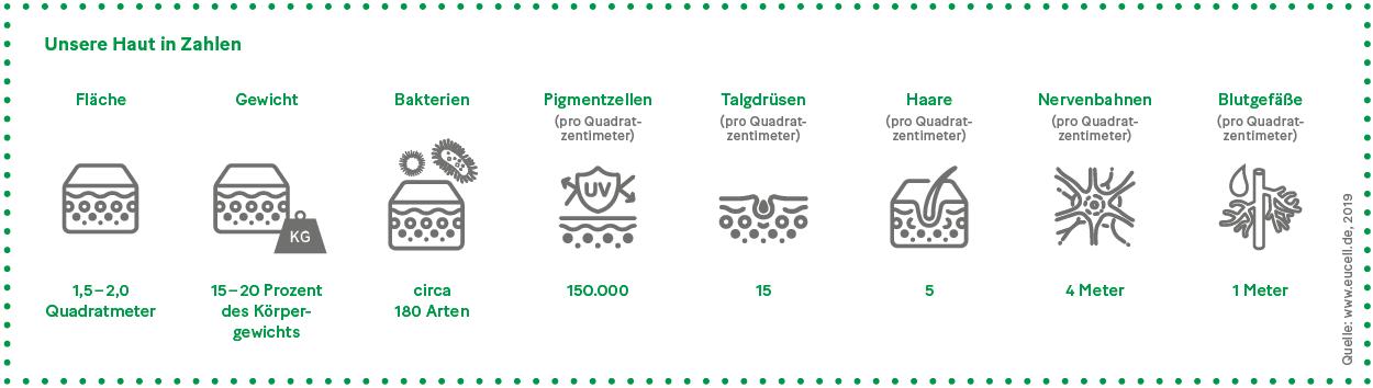 Grafik: Unsere Haut in Zahlen