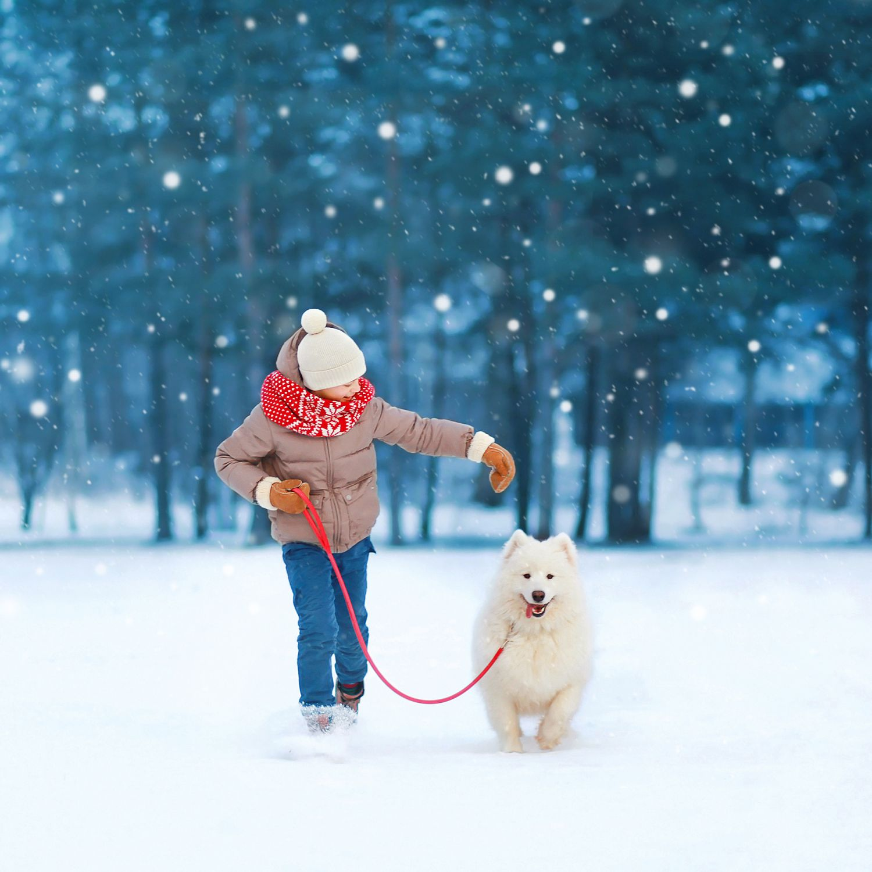 Junge geht im Winterwald mit seinem Hund spazieren